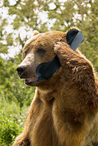 Baer-mit-Telefon-200